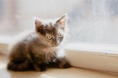 котенок Шапокляк